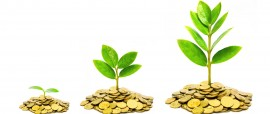 bigstock-trees-growing-on-coins-busin-80909966